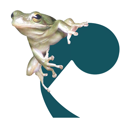 Frog on a Cello Icon